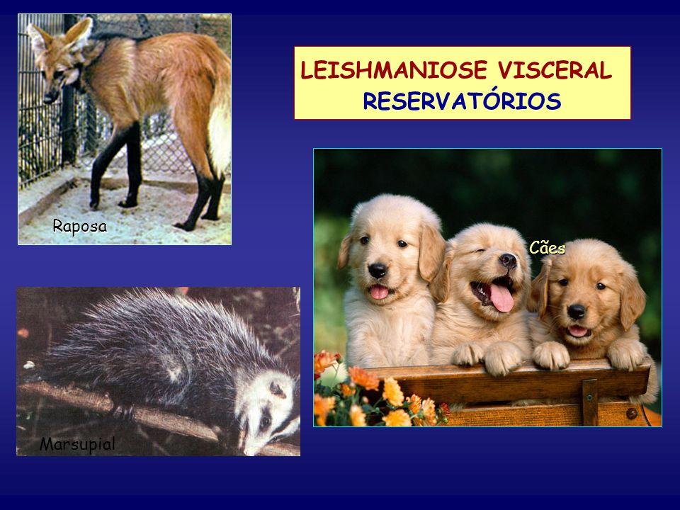 LEISHMANIOSE VISCERAL RESERVATÓRIOS Cães Raposa Marsupial