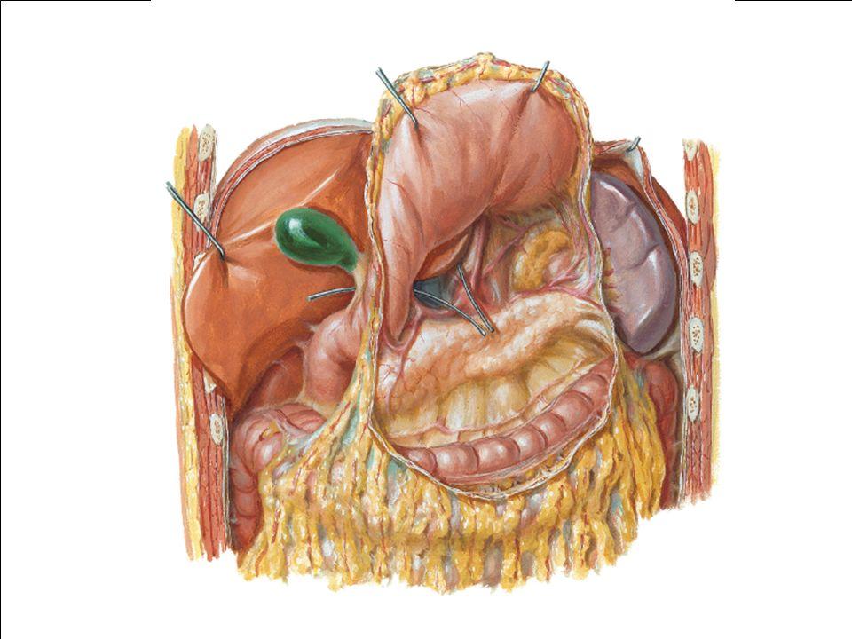 Aguda pancreatite Aguda Complicações Locais Abscesso Coleções Peri-pancreáticas Necrose Bradley EL III.