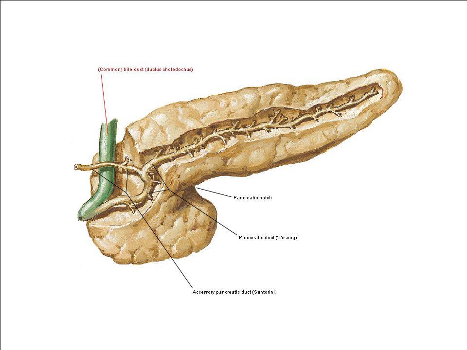 Aguda pancreatite Aguda Terapia Nutricional