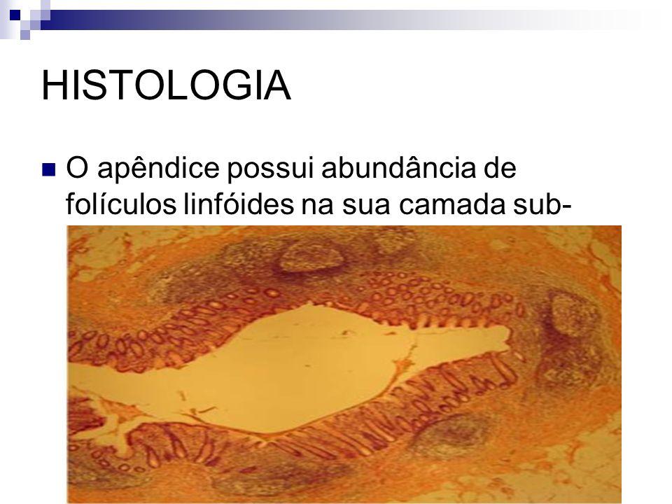 ETIOLOGIA 65% hiperplasia folicular linfóide 35% fecalitos 4% corpo estranho - parasitas - sementes - bário 1% TUMORES-ceco,apêndice,tbc,crohn