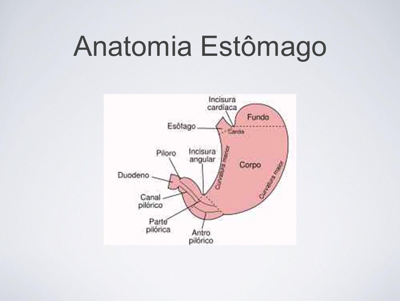 Síndrome de Zollinger-Ellison Hipersecreção do ácido gástrico, doença ulcerosa péptica e tumor de células não-beta das ilhotas pancreáticas; Gastrinomas (cabeça do pâncreas, duodeno ou linfonodo regional); Sintomas associados - diarreia, perda de peso e esteatorreia.