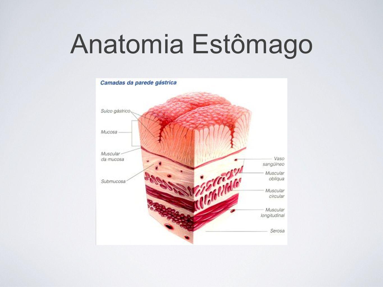 CLASSIFICAÇÃO Úlceras gástricas: – Tipo 1: 60 a 70% dos casos, tipicamente na curvatura menor, e a maioria está associada a gastrite antral difusa ou atrófica multifocal; – Tipo 2: ~15% dos casos, também na curvatura menor, mas associada a úlcera duodenal ativa ou crônica; – Tipo 3: 20% dos casos e localizadas até 2cm a partir do piloro; – Tipo 4: <10% dos casos, comum na América Latina e localizada na parte proximal do estômago ou na cárdia.