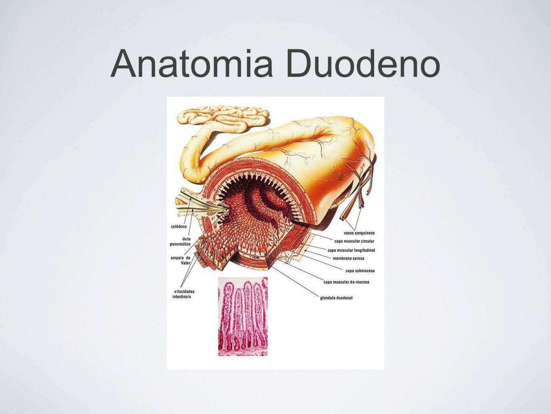 Vagotomia troncular