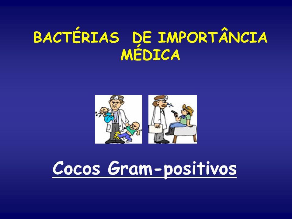 BACTÉRIAS DE IMPORTÂNCIA MÉDICA Cocos Gram-positivos