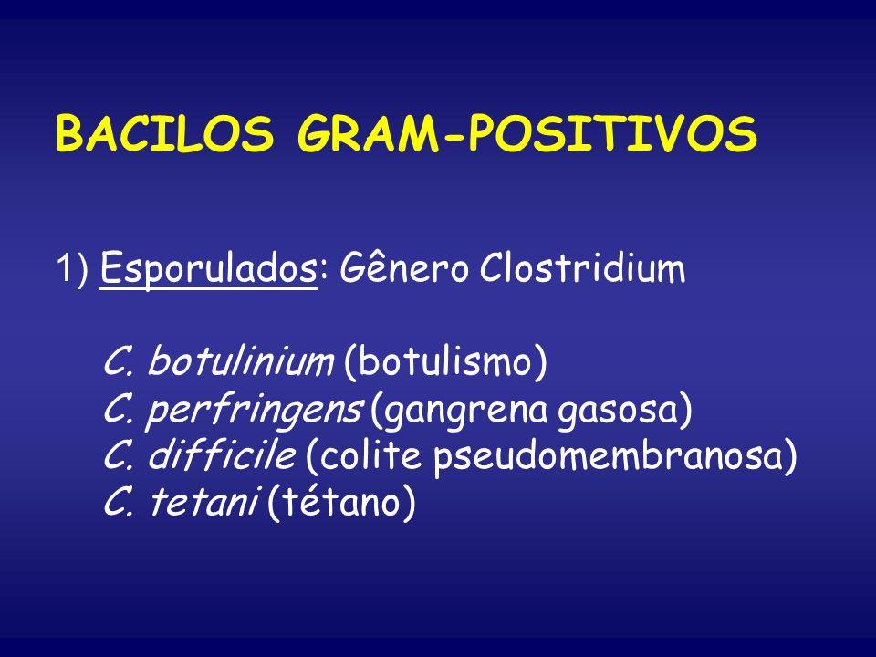 BACILOS GRAM-POSITIVOS 1) Esporulados: Gênero Clostridium C. botulinium (botulismo) C. perfringens (gangrena gasosa) C. difficile (colite pseudomembra