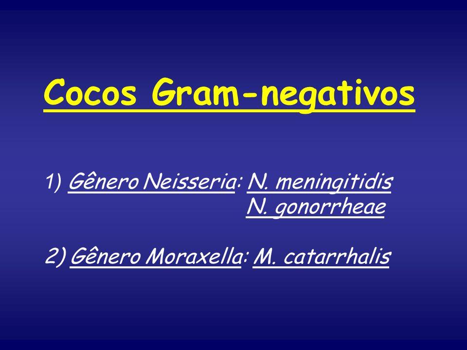Cocos Gram-negativos 1) Gênero Neisseria: N. meningitidis N. gonorrheae 2) Gênero Moraxella: M. catarrhalis
