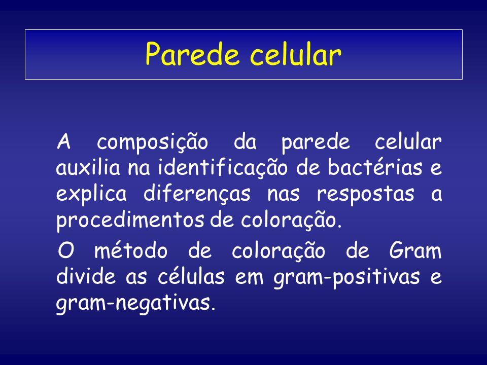 Parede celular A composição da parede celular auxilia na identificação de bactérias e explica diferenças nas respostas a procedimentos de coloração. O