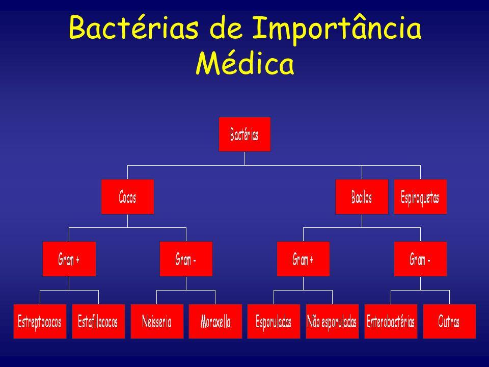 b) Não-esporulados : Gênero Listeria: L.monocytogenos Gênero Corynebacterium: C.