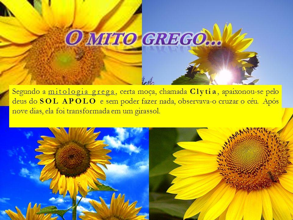 Segundo a mitologia grega, certa moça, chamada Clytia, apaixonou-se pelo deus do SOL APOLO e sem poder fazer nada, observava-o cruzar o céu. Após nove