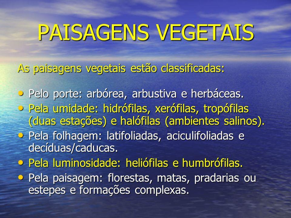 PAISAGENS VEGETAIS As paisagens vegetais estão classificadas: Pelo porte: arbórea, arbustiva e herbáceas. Pelo porte: arbórea, arbustiva e herbáceas.