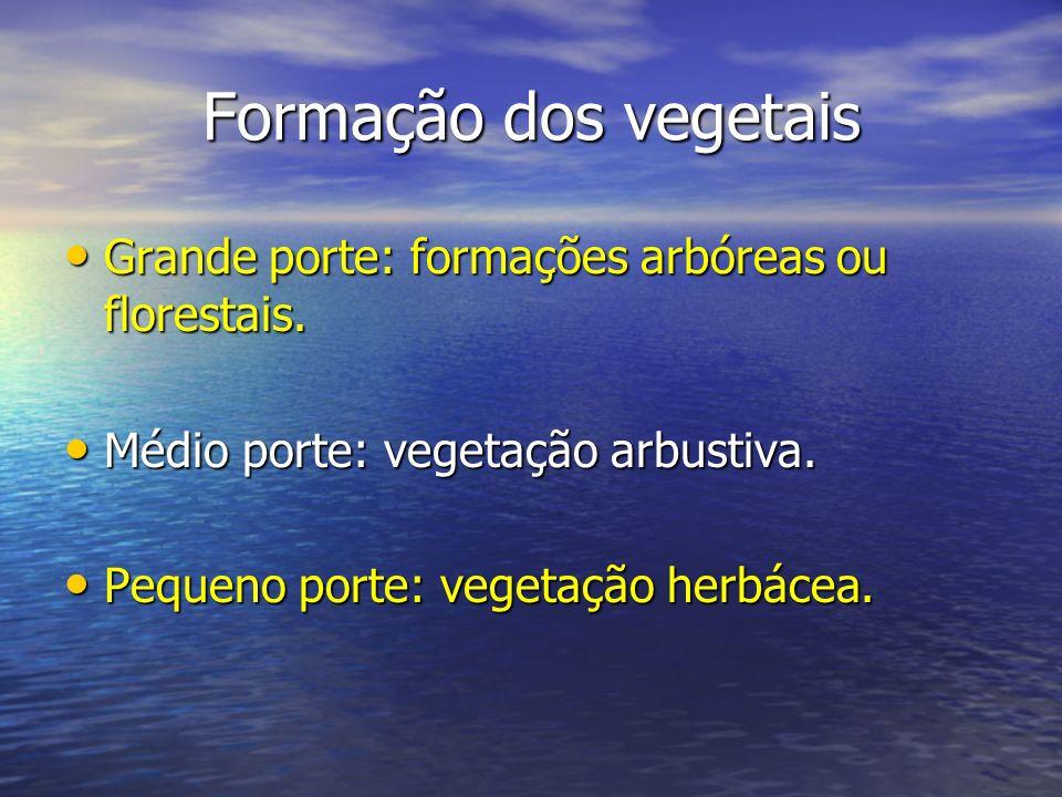 Formação dos vegetais Grande porte: formações arbóreas ou florestais. Grande porte: formações arbóreas ou florestais. Médio porte: vegetação arbustiva