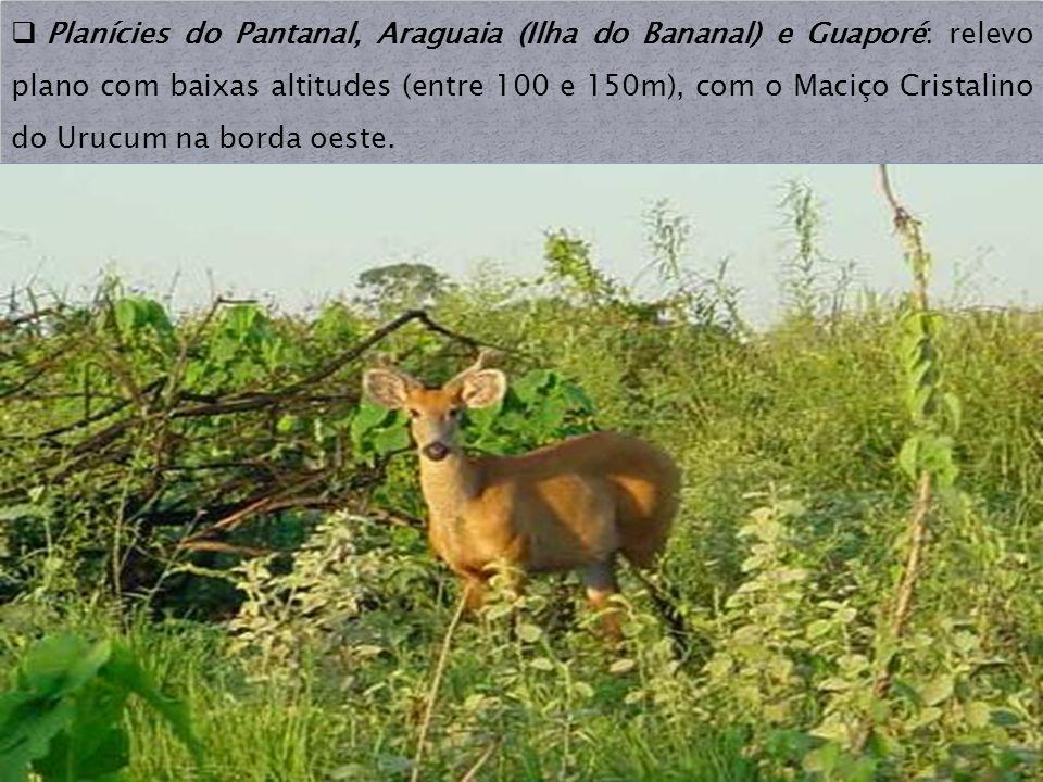 Planícies do Pantanal, Araguaia (Ilha do Bananal) e Guaporé: relevo plano com baixas altitudes (entre 100 e 150m), com o Maciço Cristalino do Urucum n