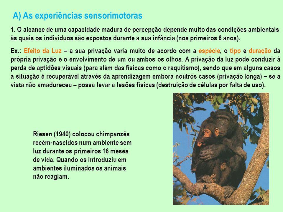 A) As experiências sensorimotoras 1. O alcance de uma capacidade madura de percepção depende muito das condições ambientais às quais os indivíduos são