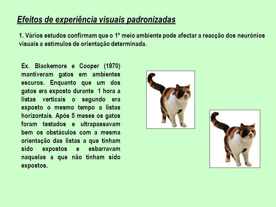 Efeitos de experiência visuais padronizadas 1. Vários estudos confirmam que o 1º meio ambiente pode afectar a reacção dos neurónios visuais a estímulo