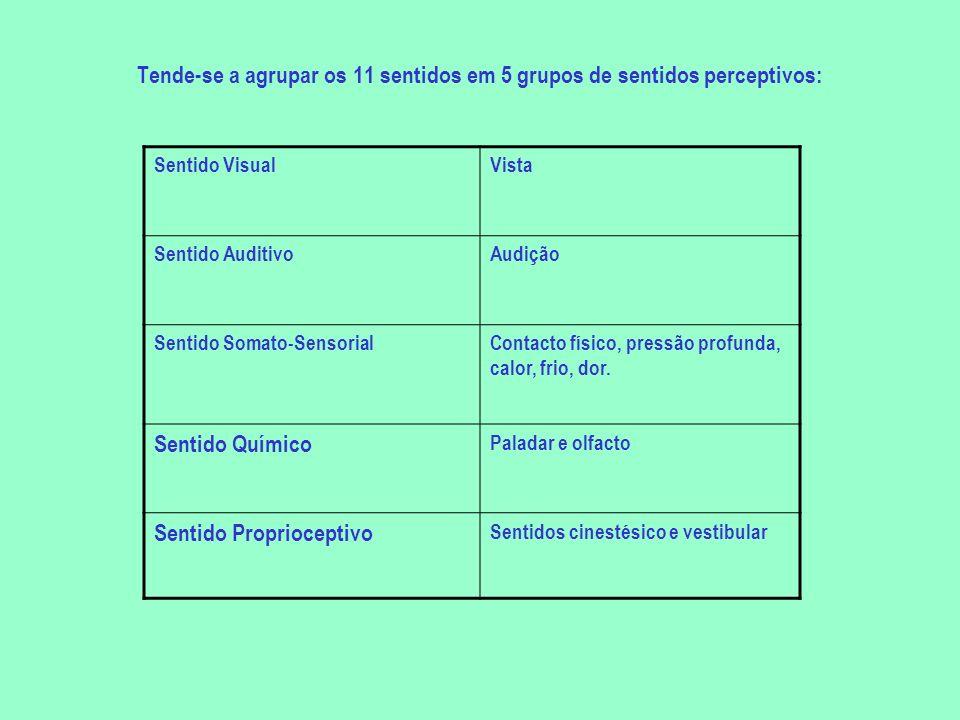 Tende-se a agrupar os 11 sentidos em 5 grupos de sentidos perceptivos: Sentido VisualVista Sentido AuditivoAudição Sentido Somato-SensorialContacto fí