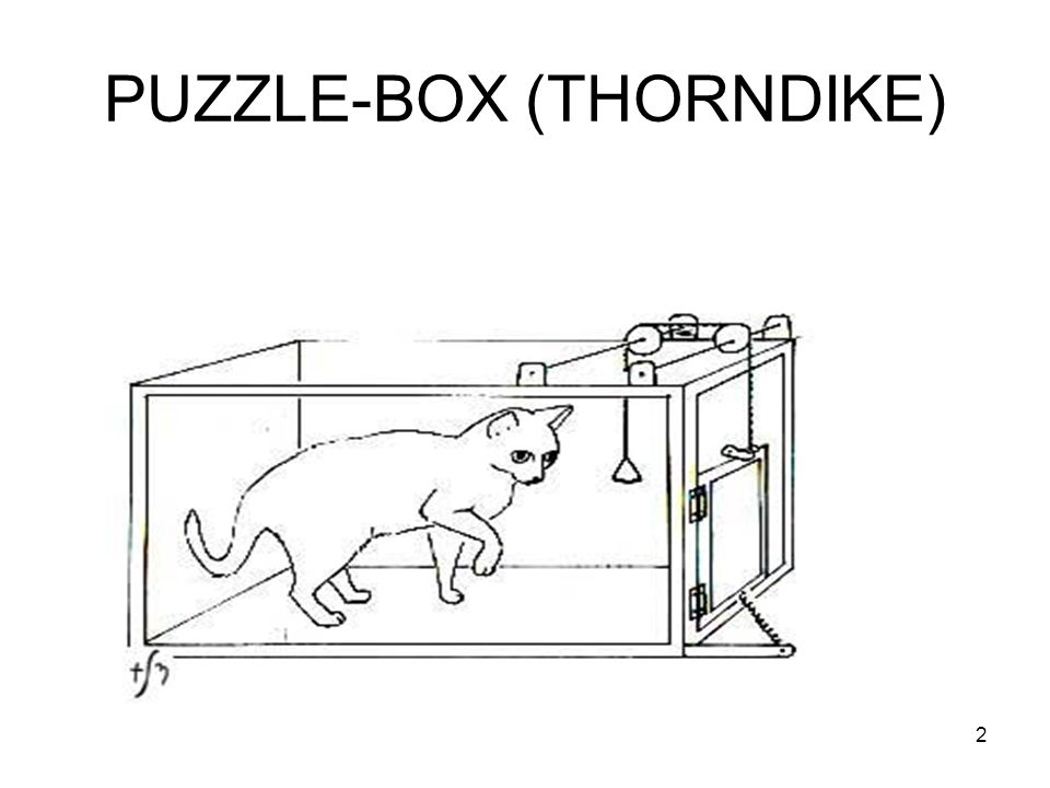 PUZZLE-BOX (THORNDIKE) 2