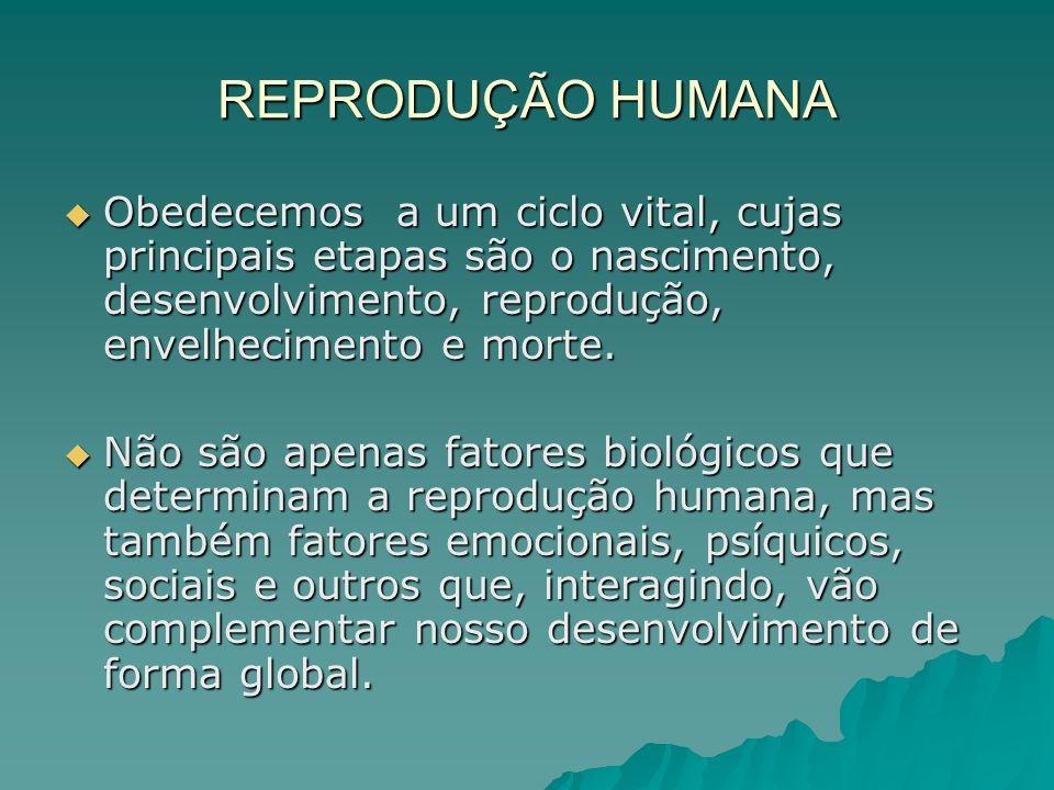 REPRODUÇÃO HUMANA Sob o ponto de vista biológico é importante conhecermos nossos órgãos genitais, bem como seu funcionamento correto.
