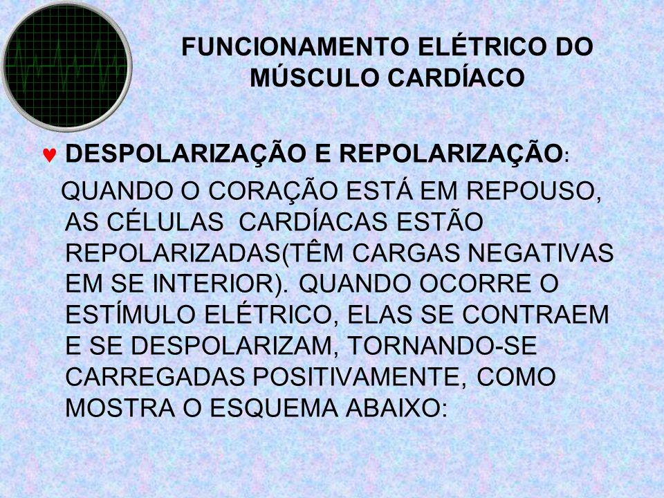 FUNCIONAMENTO ELÉTRICO DO MÚSCULO CARDÍACO DESPOLARIZAÇÃO E REPOLARIZAÇÃO : QUANDO O CORAÇÃO ESTÁ EM REPOUSO, AS CÉLULAS CARDÍACAS ESTÃO REPOLARIZADAS