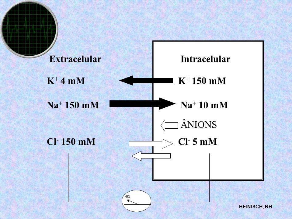 ExtracelularIntracelular K + 4 mMK + 150 mM Na + 150 mMNa + 10 mM Cl - 150 mMCl - 5 mM ÂNIONS HEINISCH, RH -85