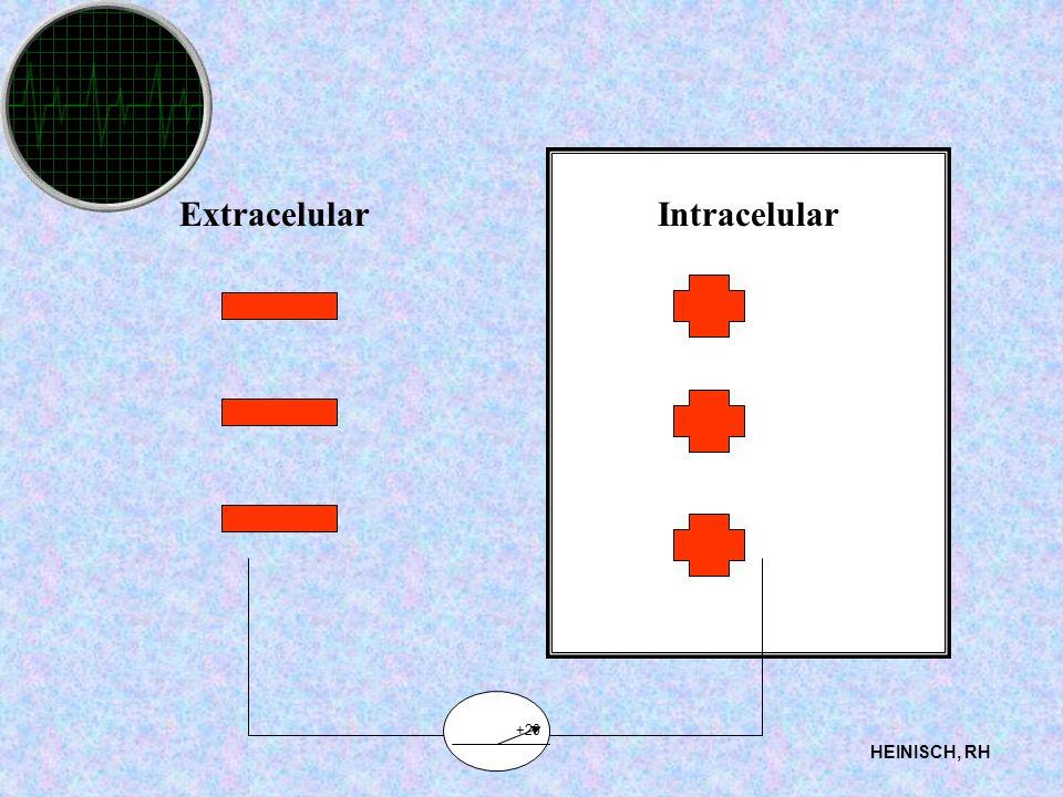 ExtracelularIntracelular HEINISCH, RH +20