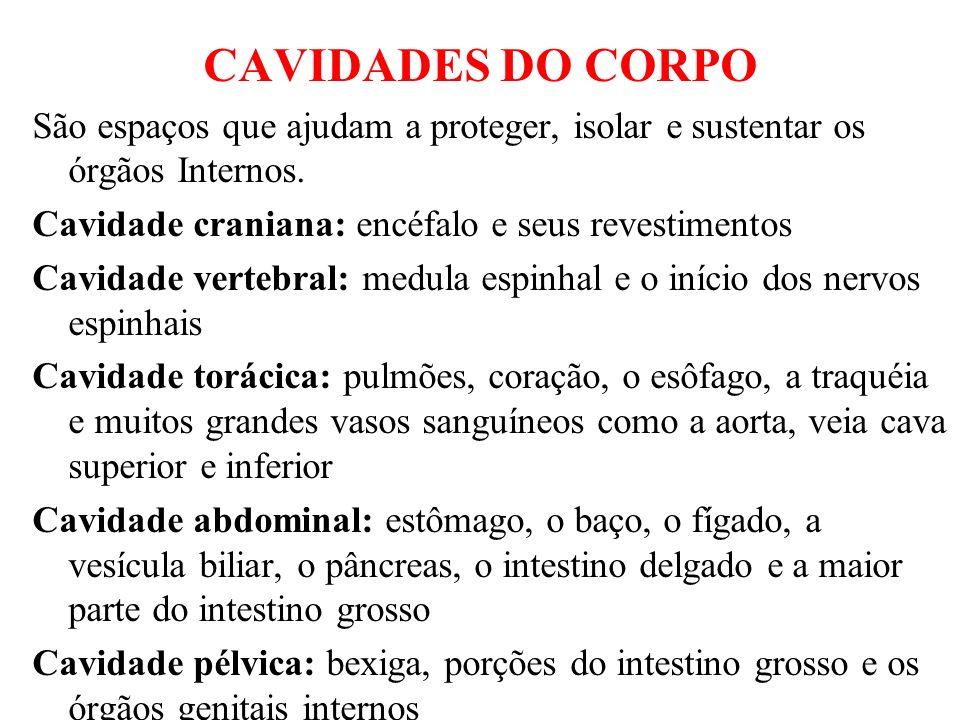 OSTECIDOS 1.TECIDO EPITELIAL - tecido de revestimento, avasculares.