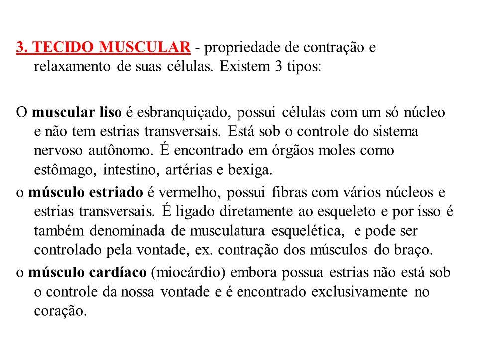 4.TECIDO NERVOSO - Formado por células estreladas, chamadas neurônios.