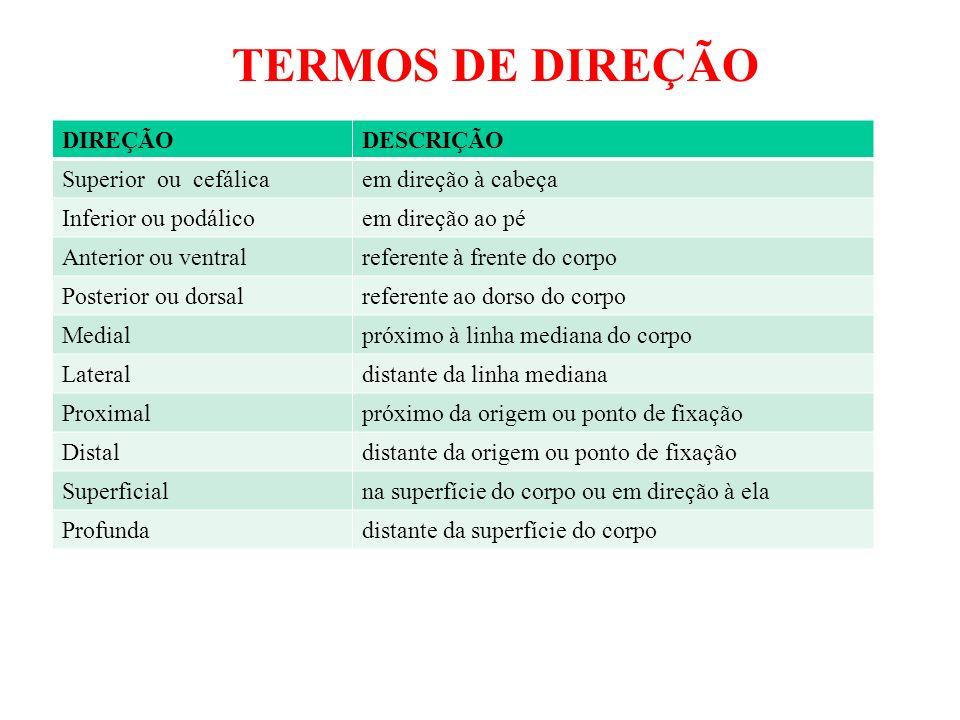 DIVISÃO DO CORPO HUMANO CABEÇA - crânio / face PESCOÇO TRONCO - tórax / abdome / pelve MEMBROS - Superiores (parte radicular: ombro e parte livre - braço / antebraço / mão e dedos Inferiores (parte radicular: quadril e parte livre – coxa / perna / pé e dedos).