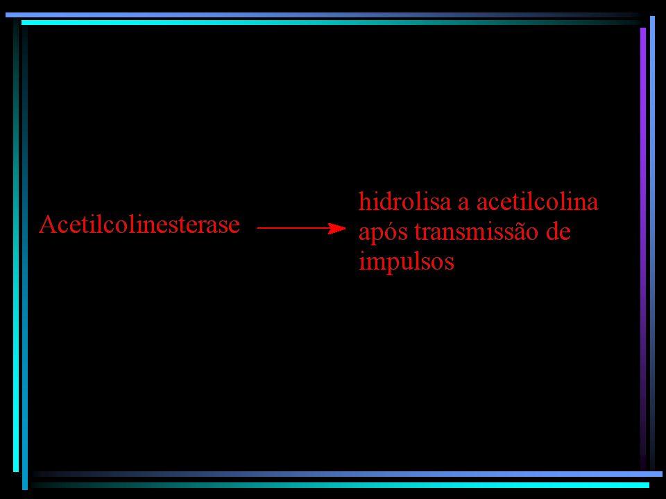 Acetilcolinesterase: enzima responsável pela hidrólise da acetilcolina, além de controlar os movimentos musculares e bloquear impulsos nervosos que at