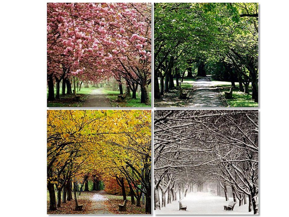 verão CLIMA BRASIL: massas de ar