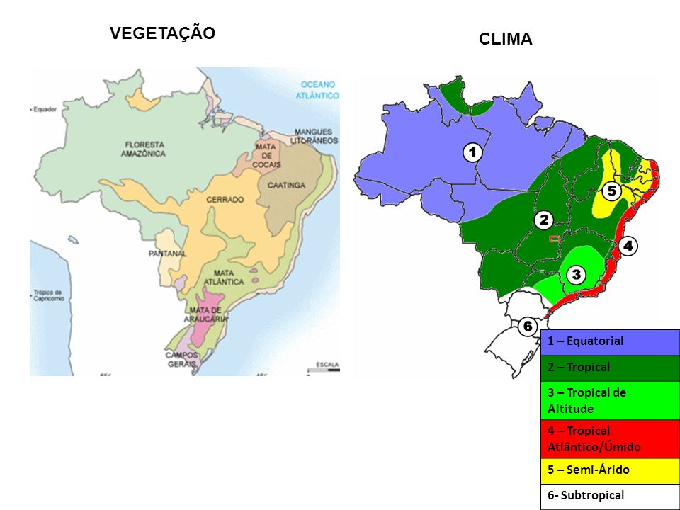 Domínios Morfoclimáticos I - Amazônico relevoterras baixas, baixa altimetria, alta sedimentação climaequatorial (muito úmido e quente) vegetaçãofloresta equatorial II - Cerrado relevoplanalto e chapadas climatropical (quente e relativamente seco) vegetaçãocerrado III - Mares de morros relevoPlanalto (meia-laranja) e planície litorânea climatropical úmido vegetaçãomata atlântica IV - Caatinga relevodepressão climasemi-árido (quente e seco) vegetaçãocaatinga V - Araucária relevoplanalto climasub-tropical (quente e frio, úmido) vegetaçãomata das araucárias VI - Pradarias relevoplanalto e depressão climasub-tropical vegetaçãocampos VII - Faixa de transição vegetaçãoTodas as outras vegetações e mais mata dos cocais e pantanal.