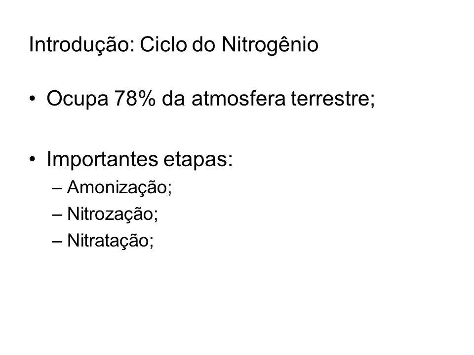 Introdução: Ciclo do Nitrogênio Ocupa 78% da atmosfera terrestre; Importantes etapas: –Amonização; –Nitrozação; –Nitratação;