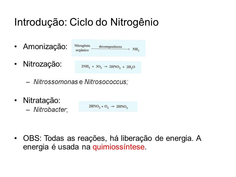 Introdução: Ciclo do Nitrogênio Amonização: Nitrozação: –N–Nitrossomonas e Nitrosococcus; Nitratação: –N–Nitrobacter; OBS: Todas as reações, há libera