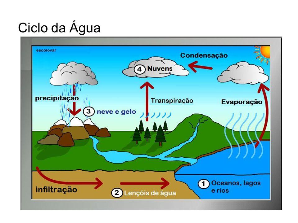 Introdução: Ciclo do Carbono Plantas: –Através da fotossíntese; –Síntese de compostos orgânicos; Animais: –Nutrição;