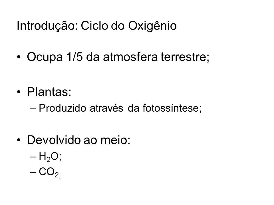 Introdução: Ciclo do Oxigênio Ocupa 1/5 da atmosfera terrestre; Plantas: –Produzido através da fotossíntese; Devolvido ao meio: –H 2 O; –CO 2;