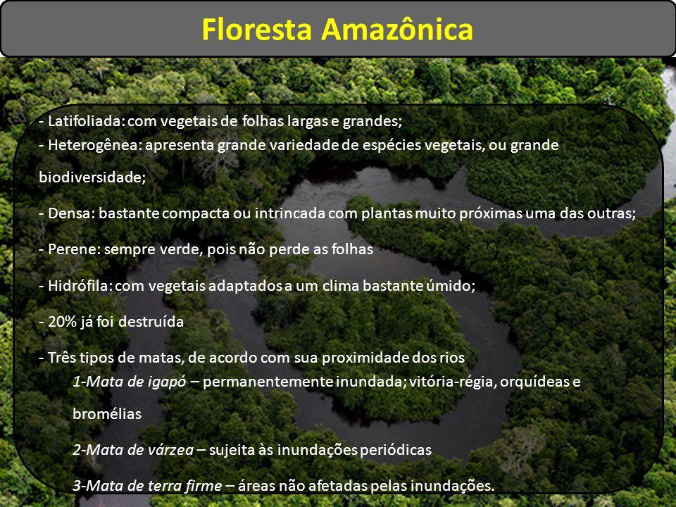 Floresta Amazônica - Latifoliada: com vegetais de folhas largas e grandes; - Heterogênea: apresenta grande variedade de espécies vegetais, ou grande b