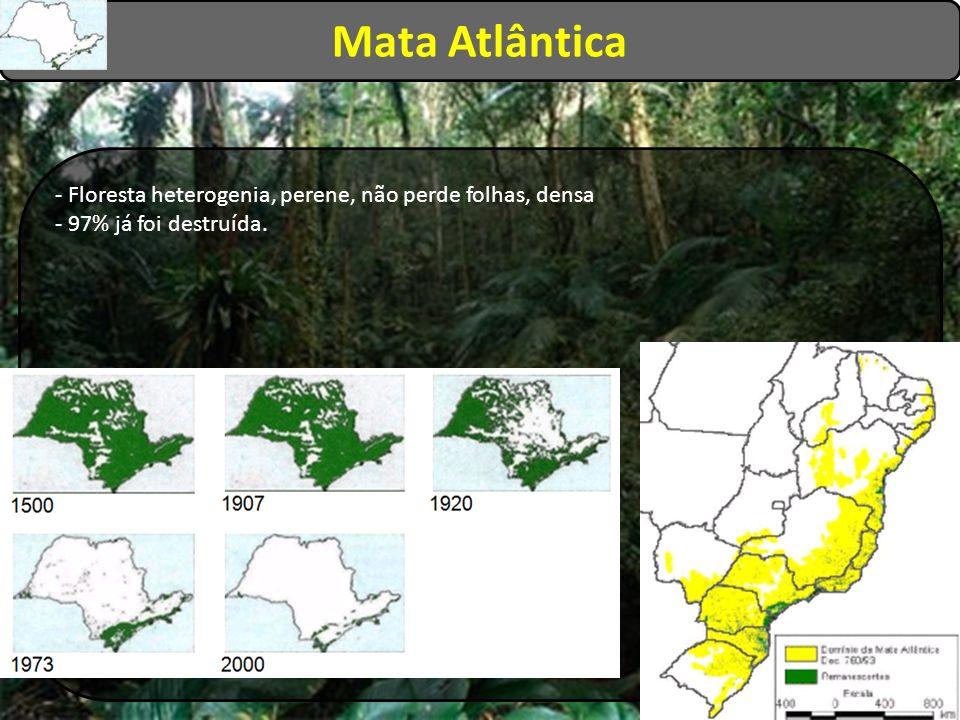 Mata Atlântica - Floresta heterogenia, perene, não perde folhas, densa - 97% já foi destruída.