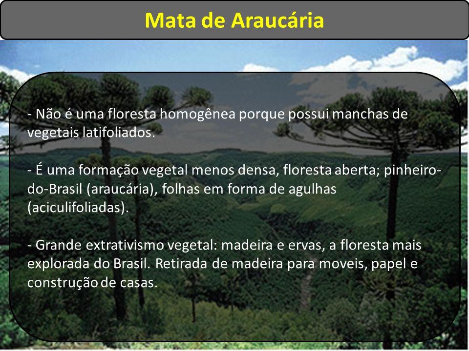 Mata de Araucária - Não é uma floresta homogênea porque possui manchas de vegetais latifoliados. - É uma formação vegetal menos densa, floresta aberta
