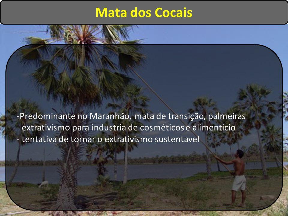 -Predominante no Maranhão, mata de transição, palmeiras - extrativismo para industria de cosméticos e alimenticio - tentativa de tornar o extrativismo