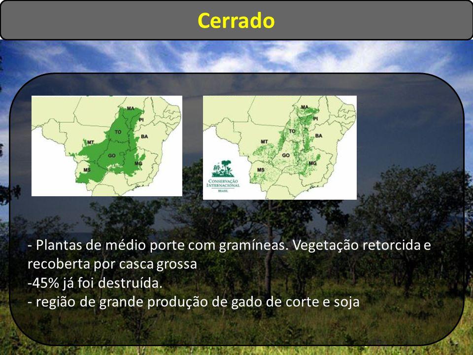 Cerrado - Plantas de médio porte com gramíneas. Vegetação retorcida e recoberta por casca grossa -45% já foi destruída. - região de grande produção de