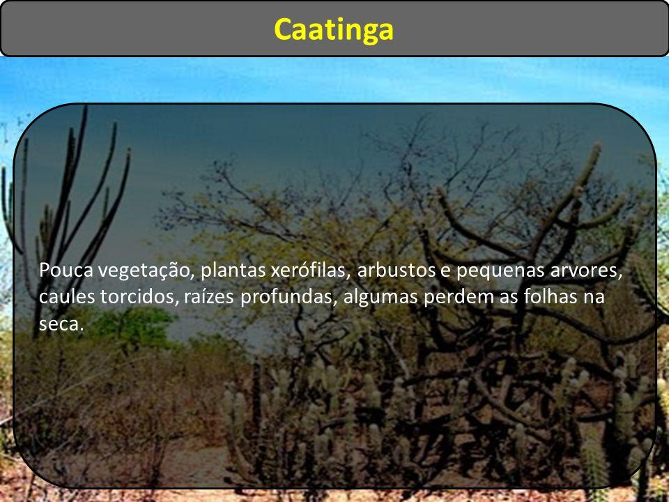 Pouca vegetação, plantas xerófilas, arbustos e pequenas arvores, caules torcidos, raízes profundas, algumas perdem as folhas na seca. Caatinga