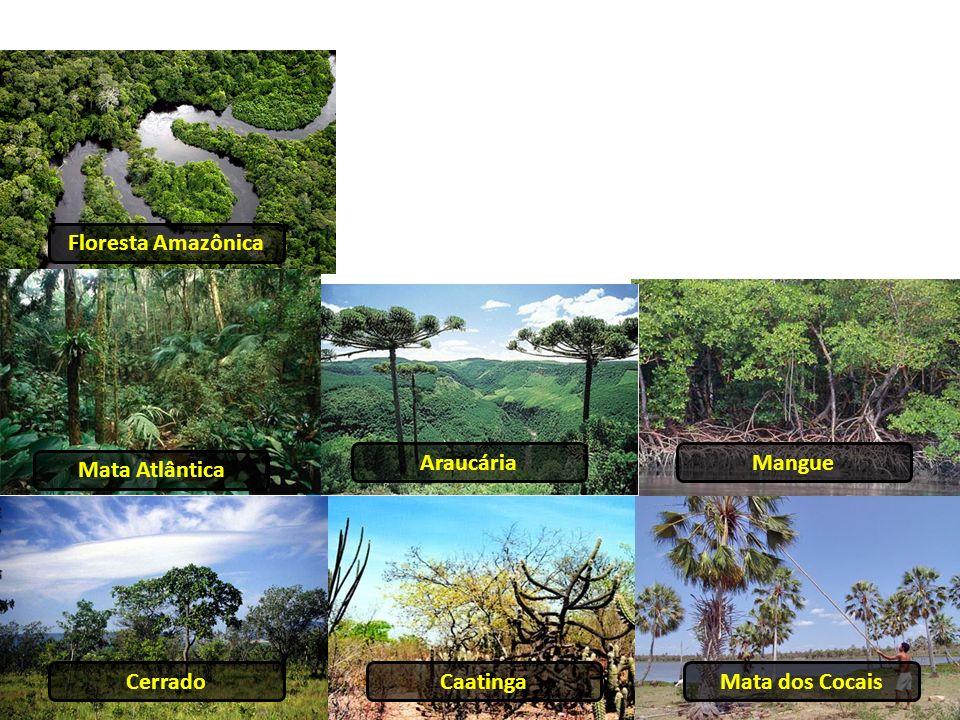 Floresta Amazônica Mata Atlântica AraucáriaMangue CerradoCaatingaMata dos Cocais