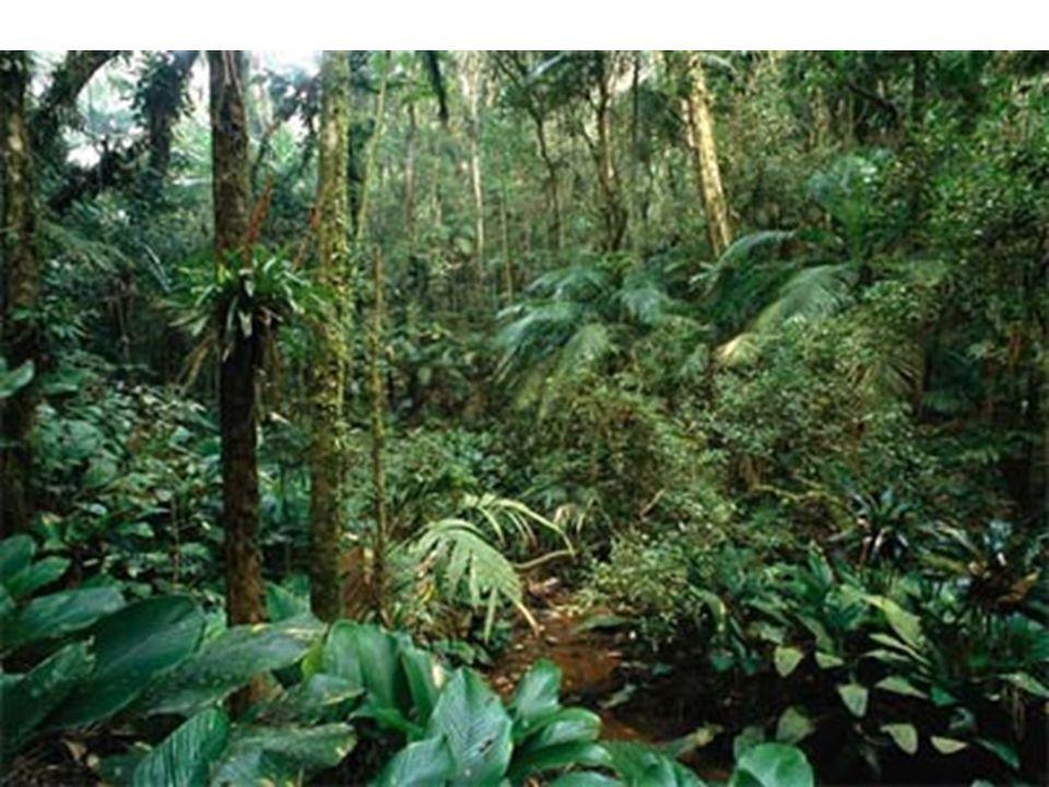 Pouca vegetação, plantas xerófilas, arbustos e pequenas arvores, caules torcidos, raízes profundas, algumas perdem as folhas na seca.