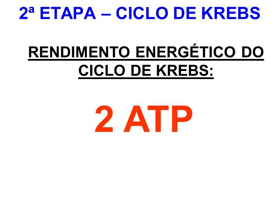 2ª ETAPA – CICLO DE KREBS RENDIMENTO ENERGÉTICO DO CICLO DE KREBS: 2 ATP