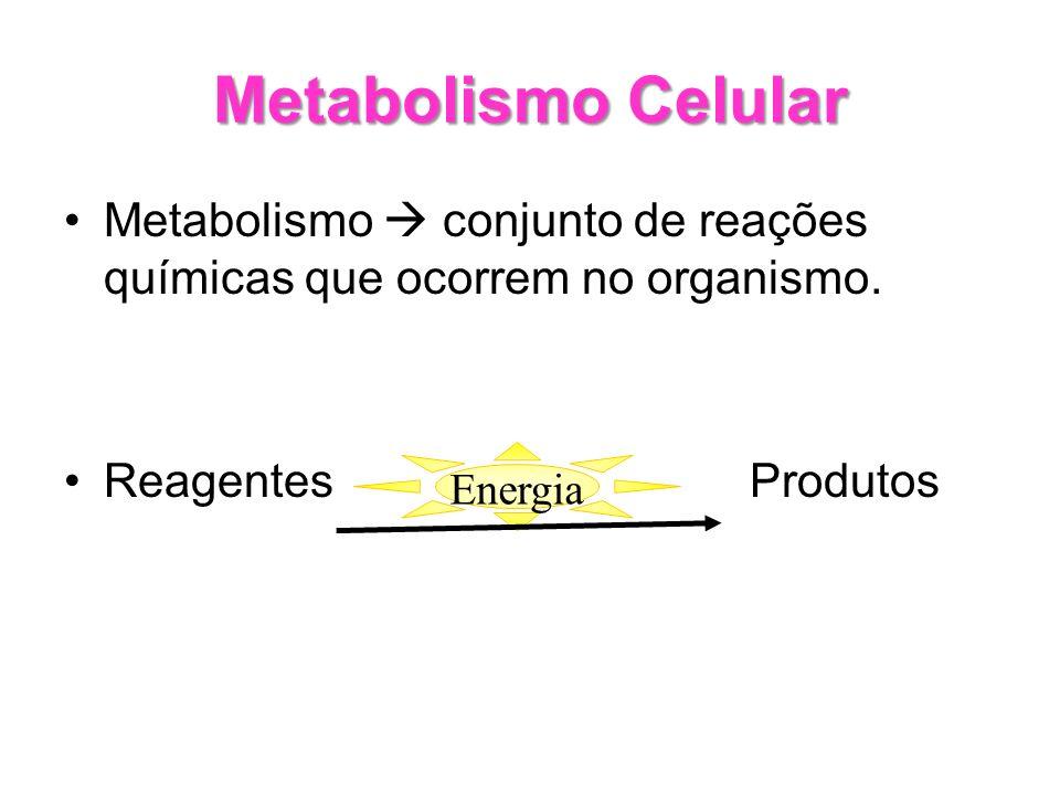Metabolismo Celular Metabolismo conjunto de reações químicas que ocorrem no organismo. Reagentes Produtos Energia