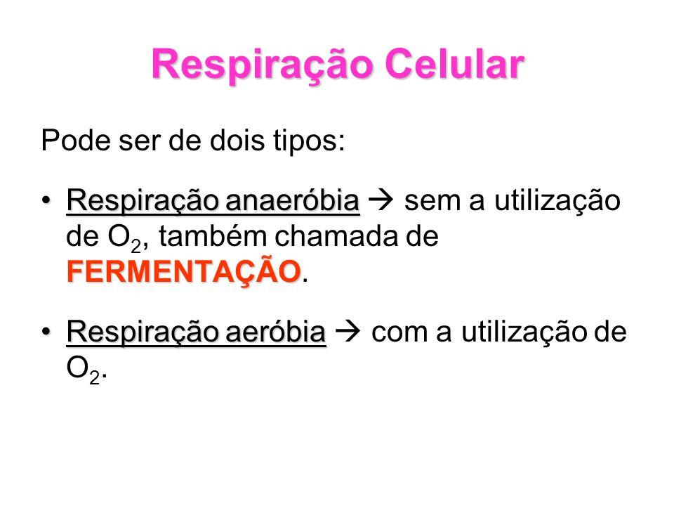 Respiração Celular Pode ser de dois tipos: Respiração anaeróbia FERMENTAÇÃORespiração anaeróbia sem a utilização de O 2, também chamada de FERMENTAÇÃO