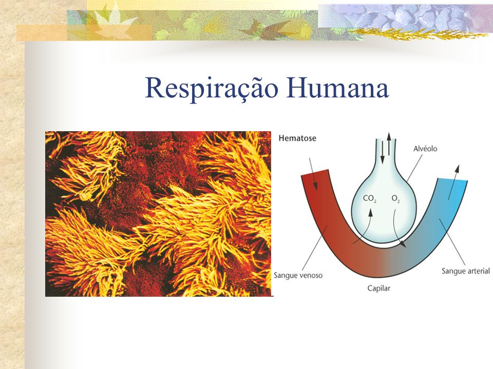 Respiração Humana