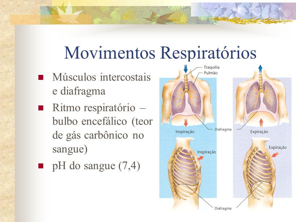 Movimentos Respiratórios Músculos intercostais e diafragma Ritmo respiratório – bulbo encefálico (teor de gás carbônico no sangue) pH do sangue (7,4)