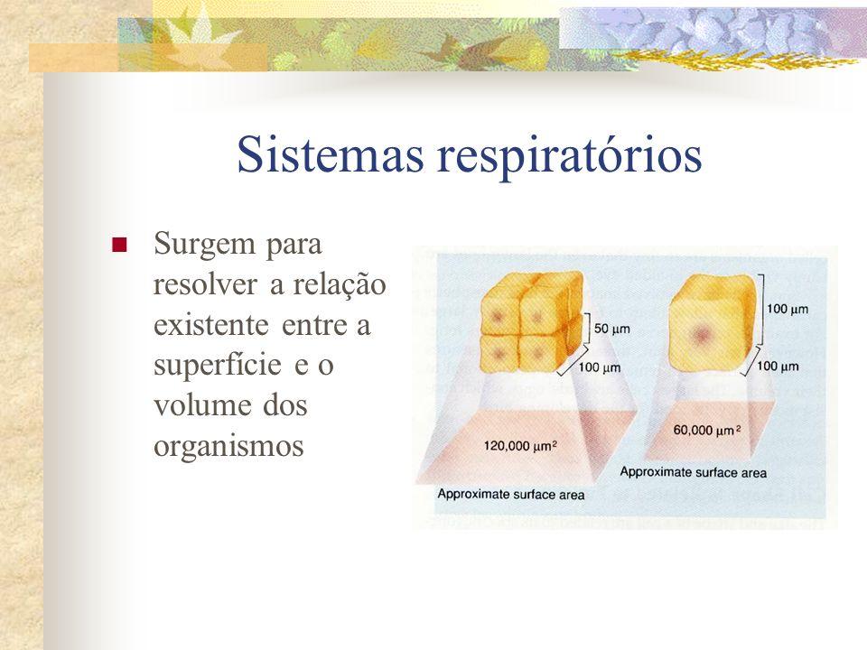 Sistemas respiratórios Surgem para resolver a relação existente entre a superfície e o volume dos organismos