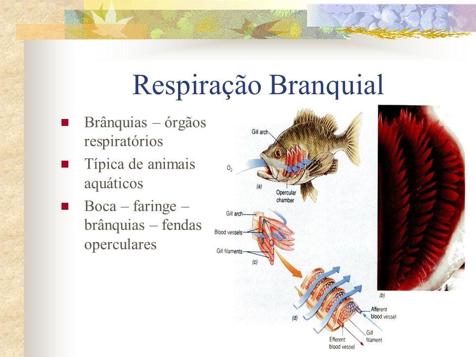 Respiração Branquial Brânquias – órgãos respiratórios Típica de animais aquáticos Boca – faringe – brânquias – fendas operculares