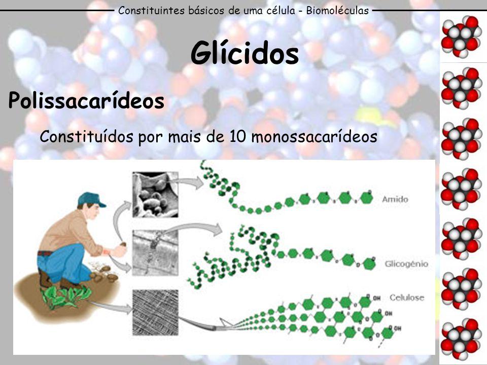 Constituintes básicos de uma célula - Biomoléculas Glícidos Polissacarídeos Constituídos por mais de 10 monossacarídeos